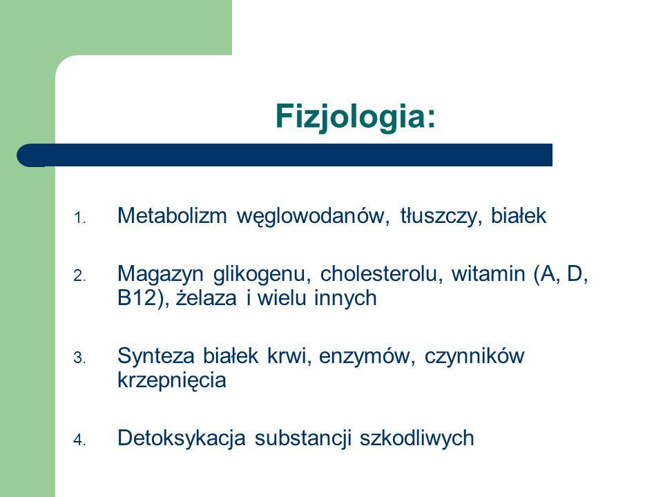 Fizjologia: 1. Metabolizm węglowodanów, tłuszczy, białek 2. Magazyn glikogenu, cholesterolu, witamin (A, D, B12), żelaza i wielu innych 3. Synteza bia