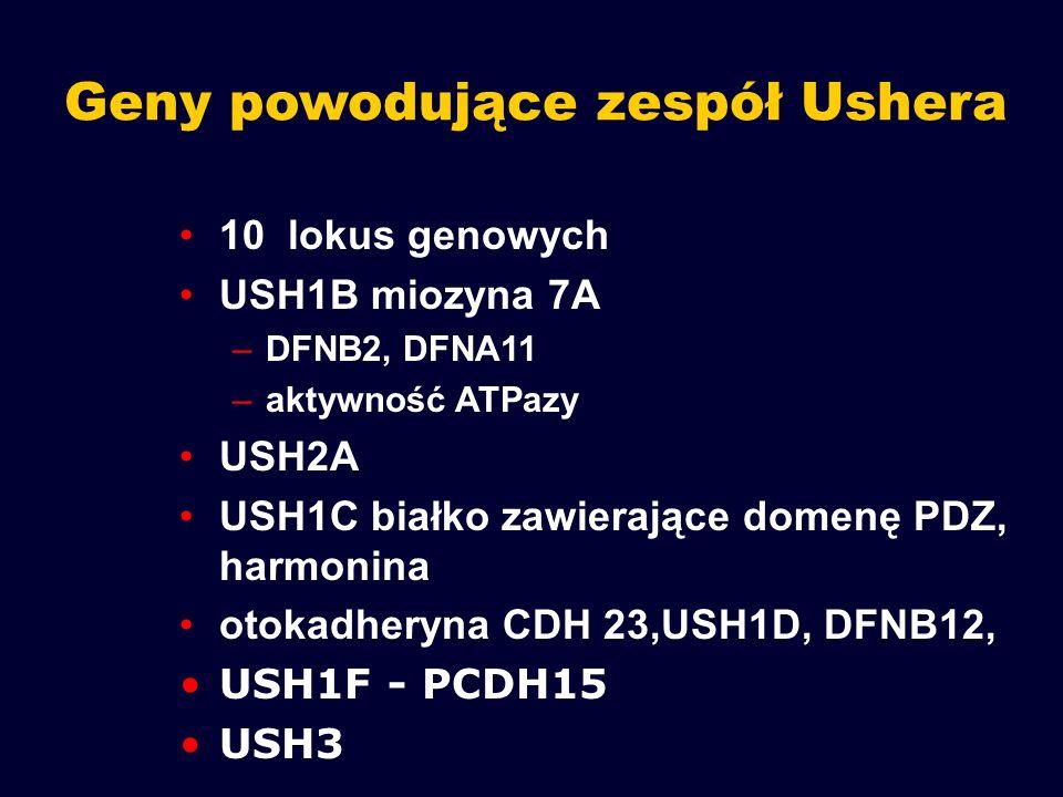 Geny powodujące zespół Ushera 10 lokus genowych USH1B miozyna 7A –DFNB2, DFNA11 –aktywność ATPazy USH2A USH1C białko zawierające domenę PDZ, harmonina