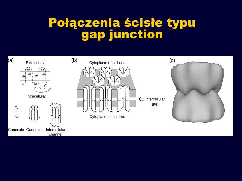Połączenia ścisłe typu gap junction