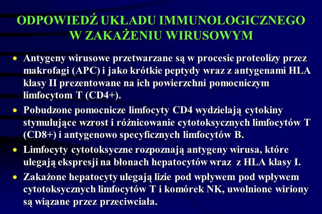 ODPOWIEDŹ UKŁADU IMMUNOLOGICZNEGO W ZAKAŻENIU WIRUSOWYM  Antygeny wirusowe przetwarzane są w procesie proteolizy przez makrofagi (APC) i jako krótkie peptydy wraz z antygenami HLA klasy II prezentowane na ich powierzchni pomocniczym limfocytom T (CD4+).