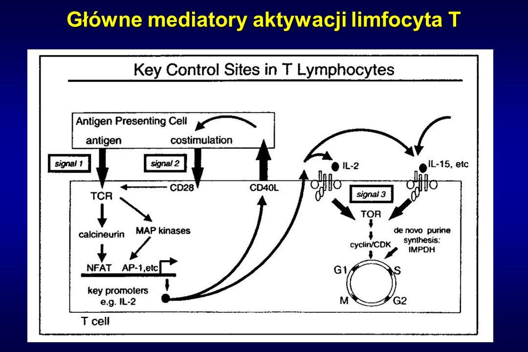 Główne mediatory aktywacji limfocyta T