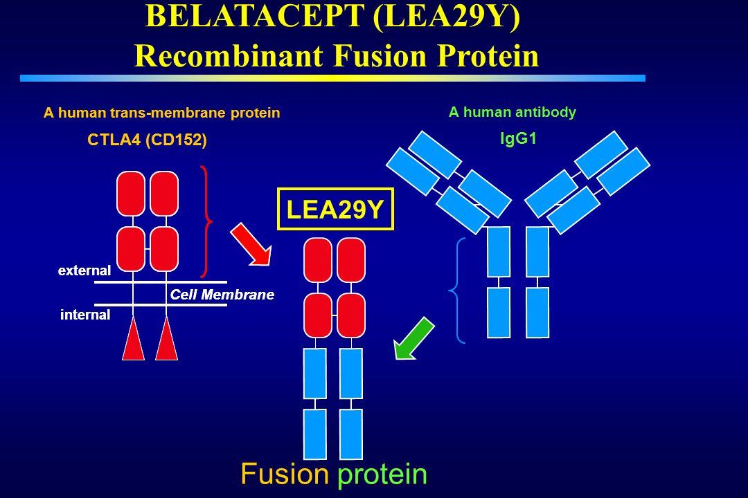 BELATACEPT (LEA29Y) Recombinant Fusion Protein IgG1 LEA29Y Cell Membrane CTLA4 (CD152) external internal A human trans-membrane protein Fusion protein
