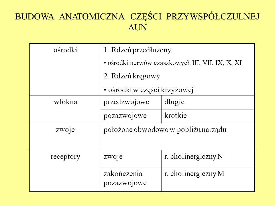 BUDOWA ANATOMICZNA CZĘŚCI PRZYWSPÓŁCZULNEJ AUN ośrodki1. Rdzeń przedłużony ośrodki nerwów czaszkowych III, VII, IX, X, XI 2. Rdzeń kręgowy ośrodki w c