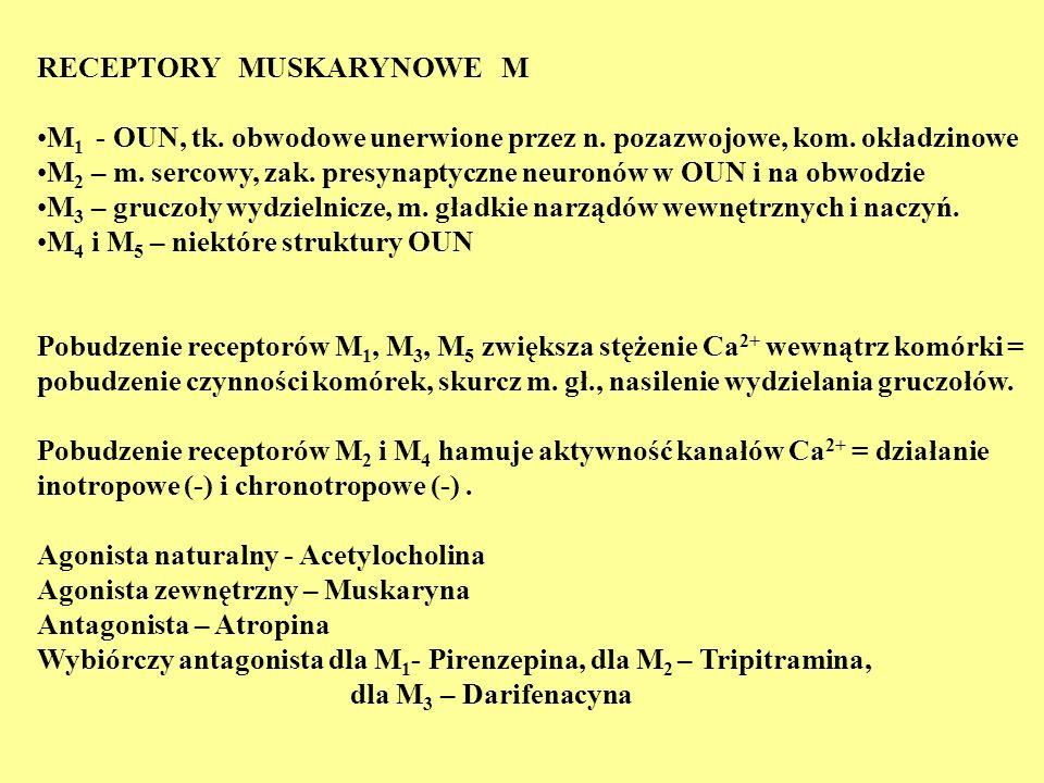 RECEPTORY MUSKARYNOWE M M 1 - OUN, tk. obwodowe unerwione przez n. pozazwojowe, kom. okładzinowe M 2 – m. sercowy, zak. presynaptyczne neuronów w OUN