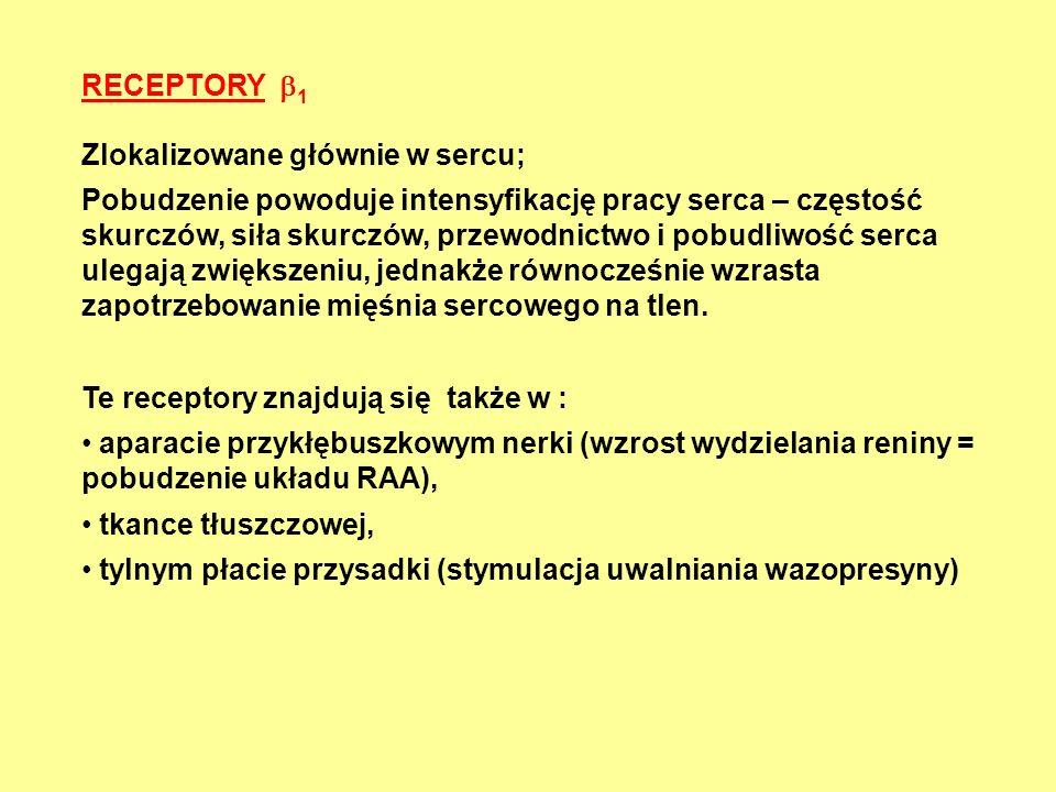 RECEPTORY  1 Zlokalizowane głównie w sercu; Pobudzenie powoduje intensyfikację pracy serca – częstość skurczów, siła skurczów, przewodnictwo i pobudl