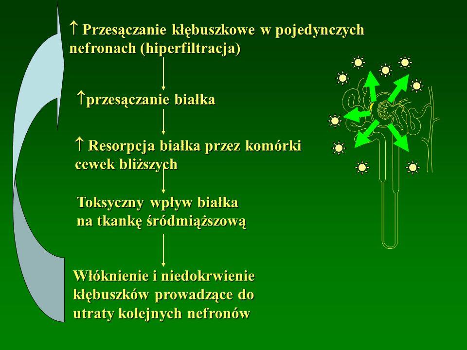  Przesączanie kłębuszkowe w pojedynczych nefronach (hiperfiltracja)  przesączanie białka  Resorpcja białka przez komórki cewek bliższych Toksyczny wpływ białka na tkankę śródmiąższową Włóknienie i niedokrwienie kłębuszków prowadzące do utraty kolejnych nefronów