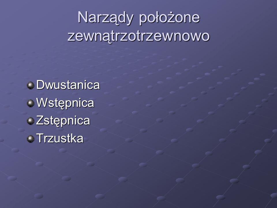 Narządy położone zewnątrzotrzewnowo DwustanicaWstępnicaZstępnicaTrzustka