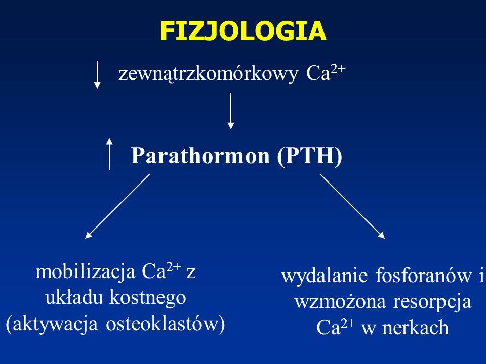 FIZJOLOGIA Parathormon (PTH) mobilizacja Ca 2+ z układu kostnego (aktywacja osteoklastów) wydalanie fosforanów i wzmożona resorpcja Ca 2+ w nerkach ze