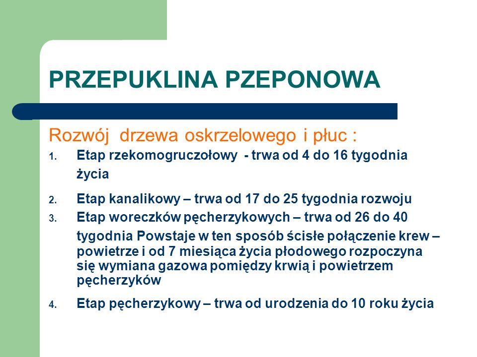 PRZEPUKLINA PZEPONOWA Rozwój drzewa oskrzelowego i płuc : 1. Etap rzekomogruczołowy - trwa od 4 do 16 tygodnia życia 2. Etap kanalikowy – trwa od 17 d
