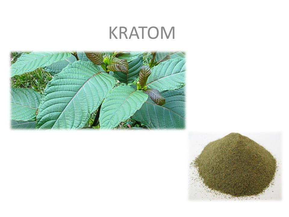 KRATOM – nazwa drzewa liściastego Mitragyna Speciosa.