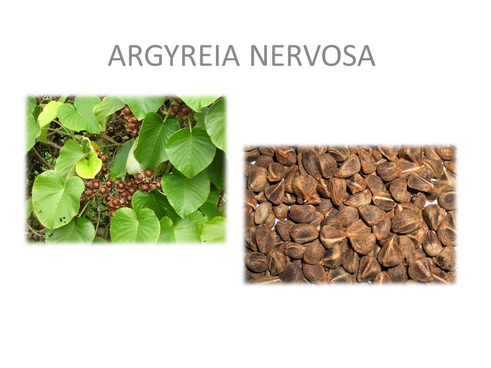 ARGYREIA NERVOSA