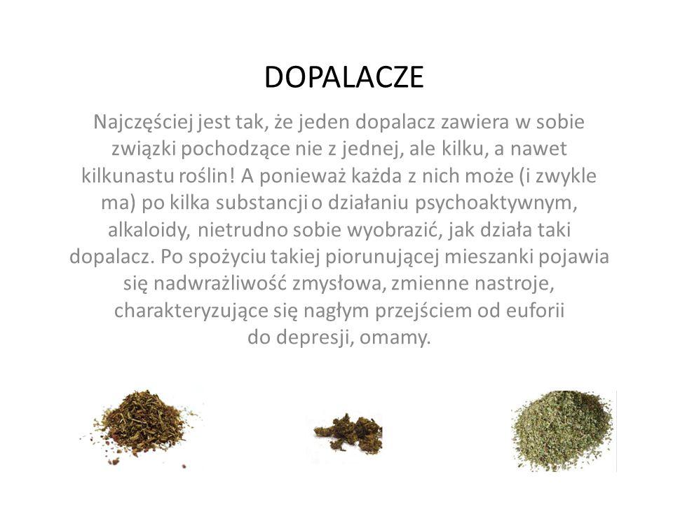 DOPALACZE Najczęściej jest tak, że jeden dopalacz zawiera w sobie związki pochodzące nie z jednej, ale kilku, a nawet kilkunastu roślin.