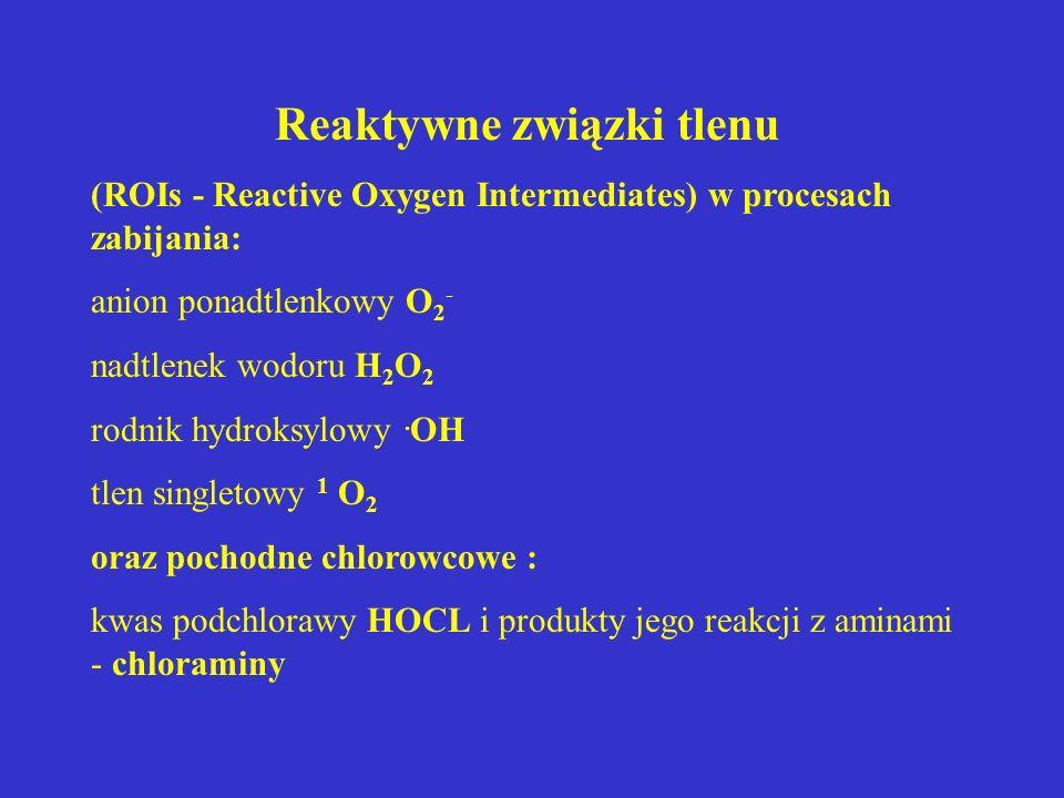 Reaktywne związki tlenu (ROIs - Reactive Oxygen Intermediates) w procesach zabijania: anion ponadtlenkowy O 2 - nadtlenek wodoru H 2 O 2 rodnik hydrok