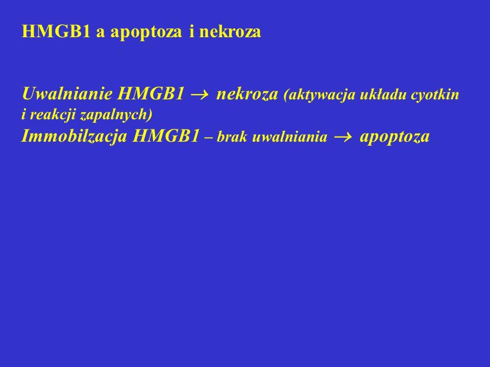 HMGB1 a apoptoza i nekroza Uwalnianie HMGB1  nekroza (aktywacja układu cyotkin i reakcji zapalnych) Immobilzacja HMGB1 – brak uwalniania  apoptoza