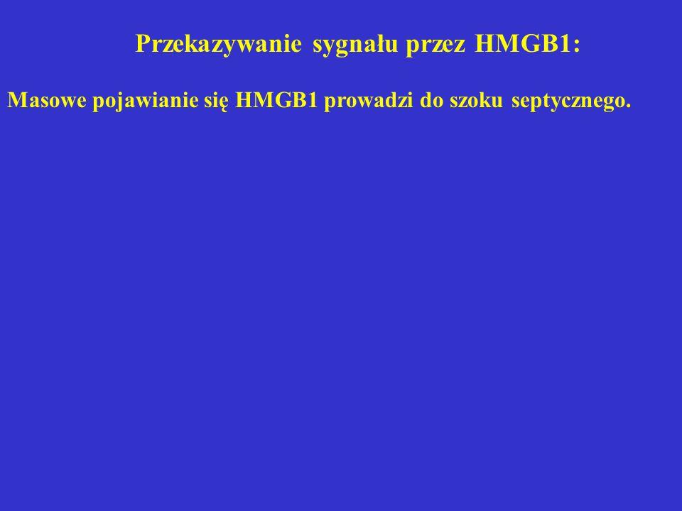 Przekazywanie sygnału przez HMGB1: Masowe pojawianie się HMGB1 prowadzi do szoku septycznego.