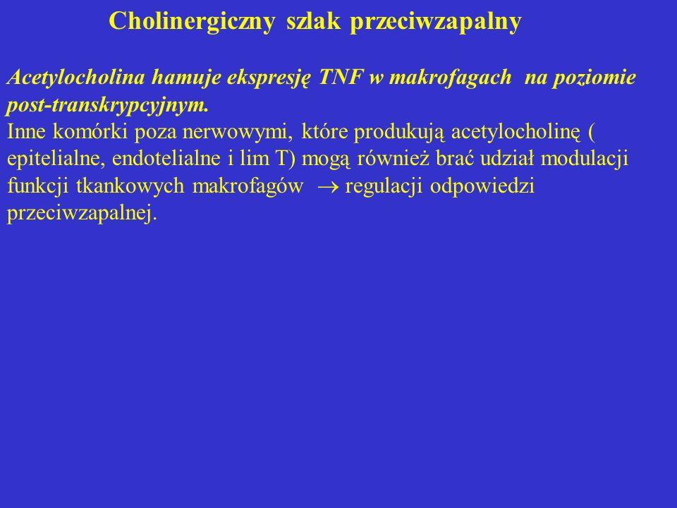 Cholinergiczny szlak przeciwzapalny Acetylocholina hamuje ekspresję TNF w makrofagach na poziomie post-transkrypcyjnym. Inne komórki poza nerwowymi, k