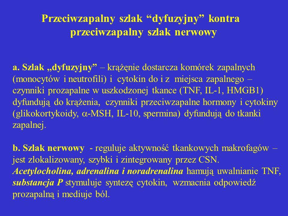 """Przeciwzapalny szlak """"dyfuzyjny"""" kontra przeciwzapalny szlak nerwowy a. Szlak,,dyfuzyjny"""" – krążęnie dostarcza komórek zapalnych (monocytów i neutrofi"""