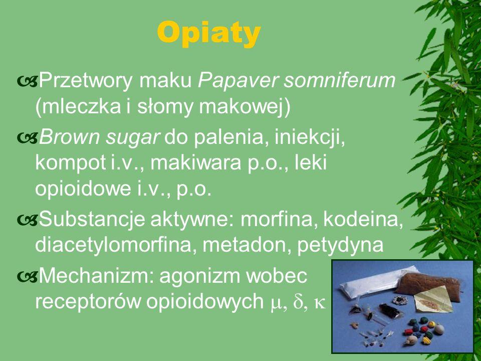  Przetwory maku Papaver somniferum (mleczka i słomy makowej)  Brown sugar do palenia, iniekcji, kompot i.v., makiwara p.o., leki opioidowe i.v., p.o