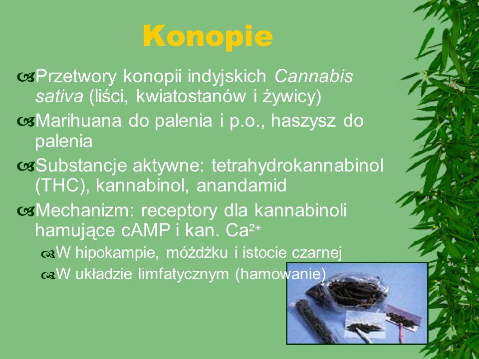  Przetwory konopii indyjskich Cannabis sativa (liści, kwiatostanów i żywicy)  Marihuana do palenia i p.o., haszysz do palenia  Substancje aktywne: