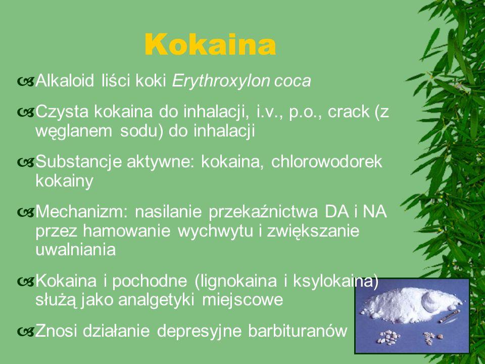 Alkaloid liści koki Erythroxylon coca  Czysta kokaina do inhalacji, i.v., p.o., crack (z węglanem sodu) do inhalacji  Substancje aktywne: kokaina,