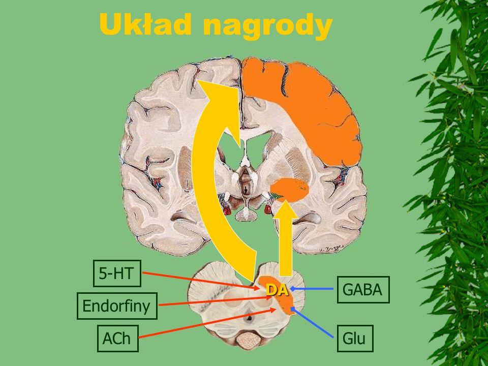Układ nagrody Endorfiny ACh GABA Glu DA 5-HT