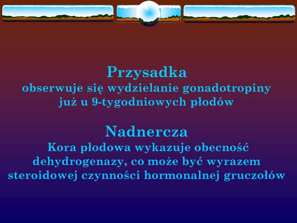 Przysadka obserwuje się wydzielanie gonadotropiny już u 9-tygodniowych płodów Nadnercza Kora płodowa wykazuje obecność dehydrogenazy, co może być wyra