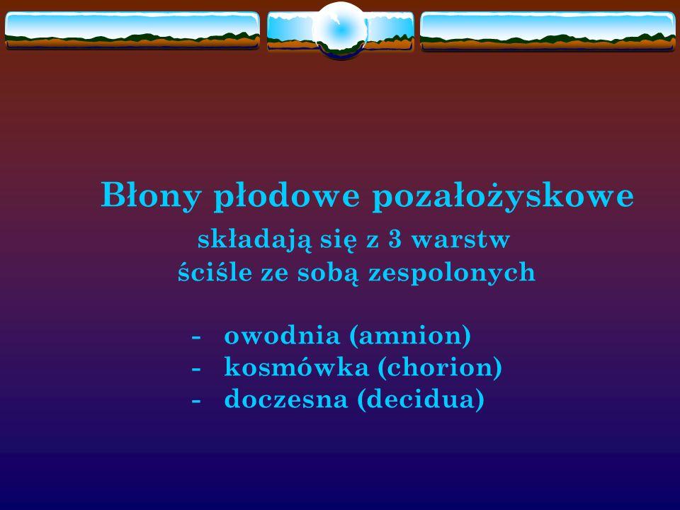 Błony płodowe pozałożyskowe składają się z 3 warstw ściśle ze sobą zespolonych - owodnia (amnion) - kosmówka (chorion) - doczesna (decidua)