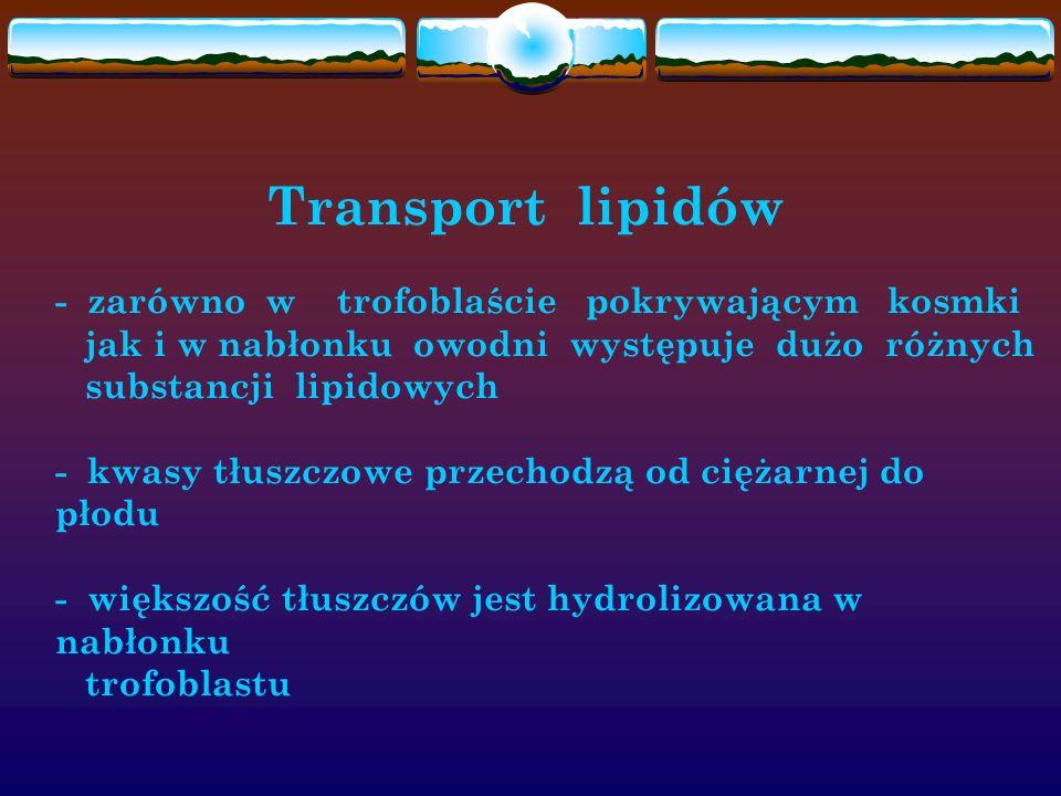 Transport lipidów - zarówno w trofoblaście pokrywającym kosmki jak i w nabłonku owodni występuje dużo różnych substancji lipidowych - kwasy tłuszczowe