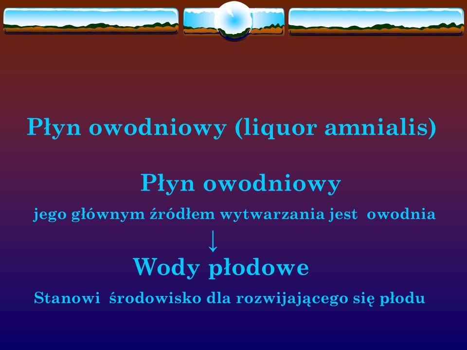 Płyn owodniowy (liquor amnialis) Płyn owodniowy jego głównym źródłem wytwarzania jest owodnia ↓ Wody płodowe Stanowi środowisko dla rozwijającego się