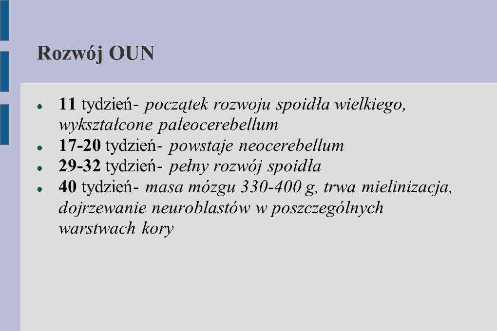 Rozwój OUN 11 tydzień- początek rozwoju spoidła wielkiego, wykształcone paleocerebellum 17-20 tydzień- powstaje neocerebellum 29-32 tydzień- pełny roz