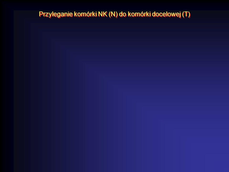 Przyleganie komórki NK (N) do komórki docelowej (T)