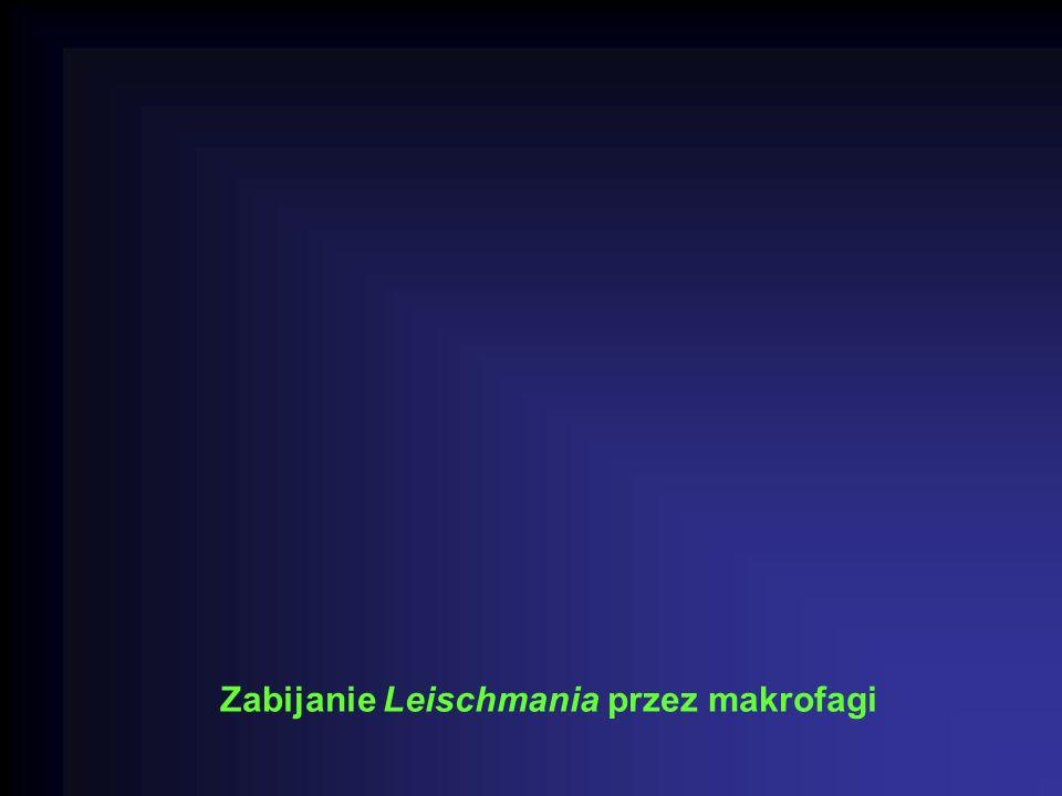 Zabijanie Leischmania przez makrofagi