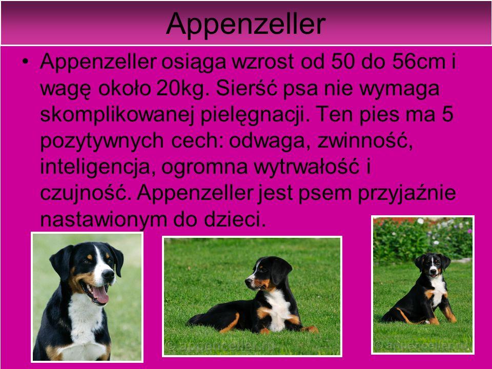 Rasy psów Mamy bardzo dużo ras psów np.Dalmatyńczyk,York, Jamnik, Pudel i wiele innych.