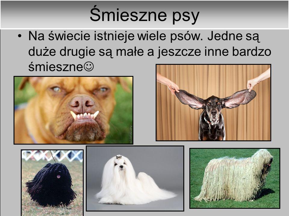 Psy-aktorzy Jest wiele filmów, w których występują psy np. 101 dalmatyńczyków, Reksio, Czterej pancerni i pies, Zakochany kundel itp.