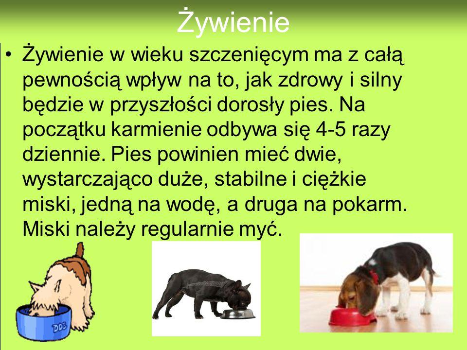 Obowiązki Pies wymaga dużo pracy. Trzeba z nim codziennie wychodzić na spacery, myć i szczotkować sierść, chodzić do weterynarza, dawać mu jeść i pić