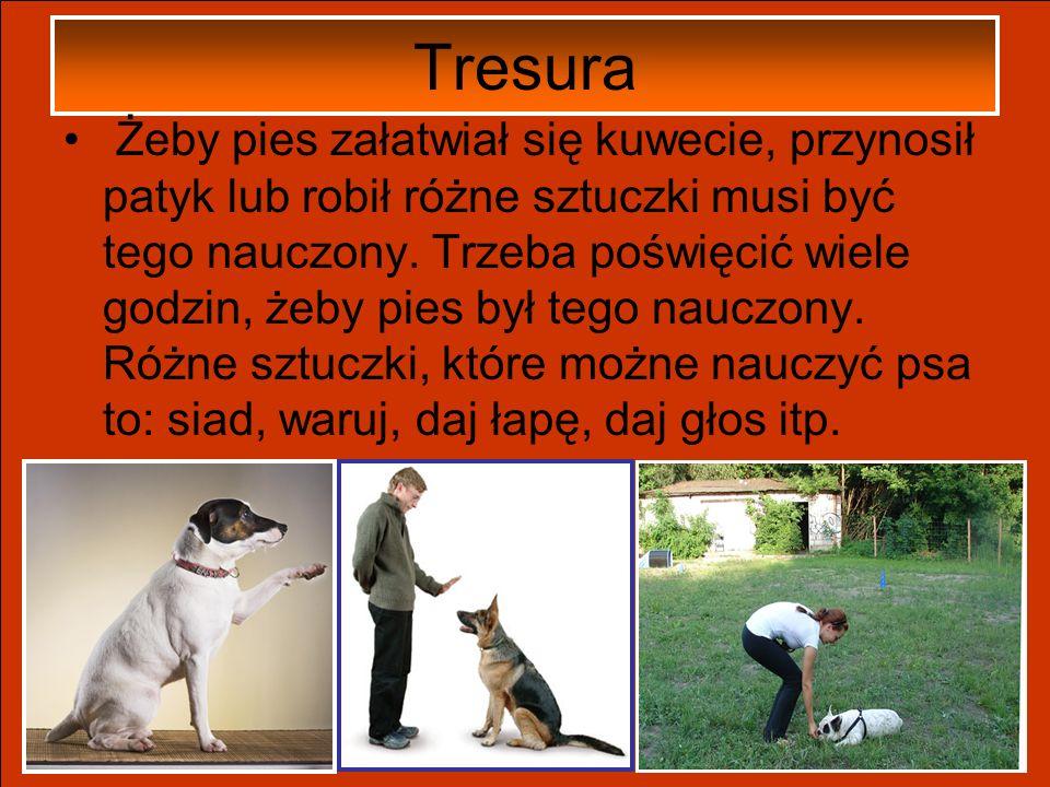 Spacery Wyprowadzanie psa, żeby się załatwił, to jedna sprawa, spacery-druga. Z psem trzeba wyjść na dwór min. 3 razy w ciągu dnia- rano, popołudniu i