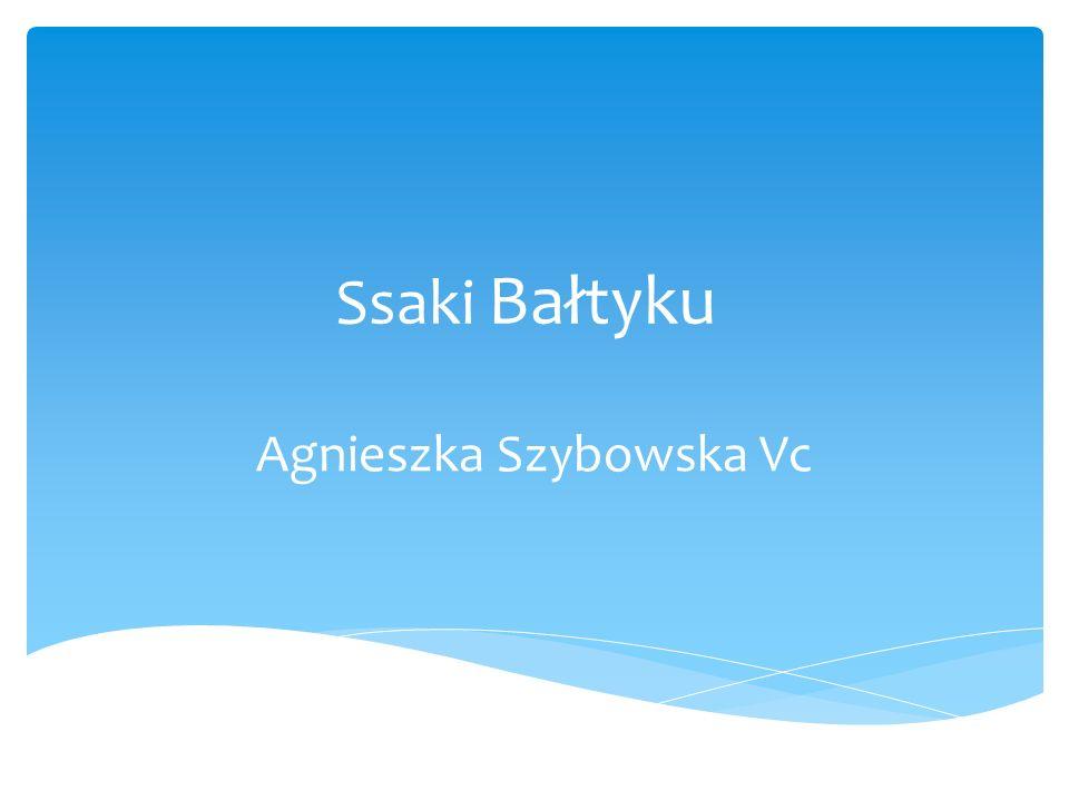 Ssaki Bałtyku Agnieszka Szybowska Vc