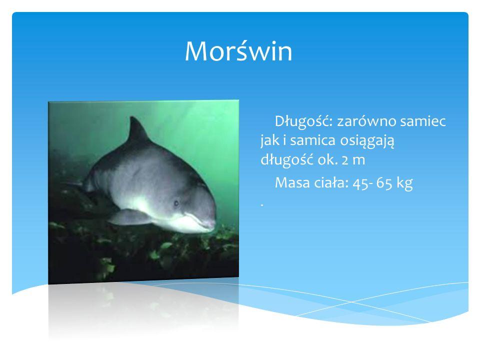 Długość: zarówno samiec jak i samica osiągają długość ok. 2 m Masa ciała: 45- 65 kg.