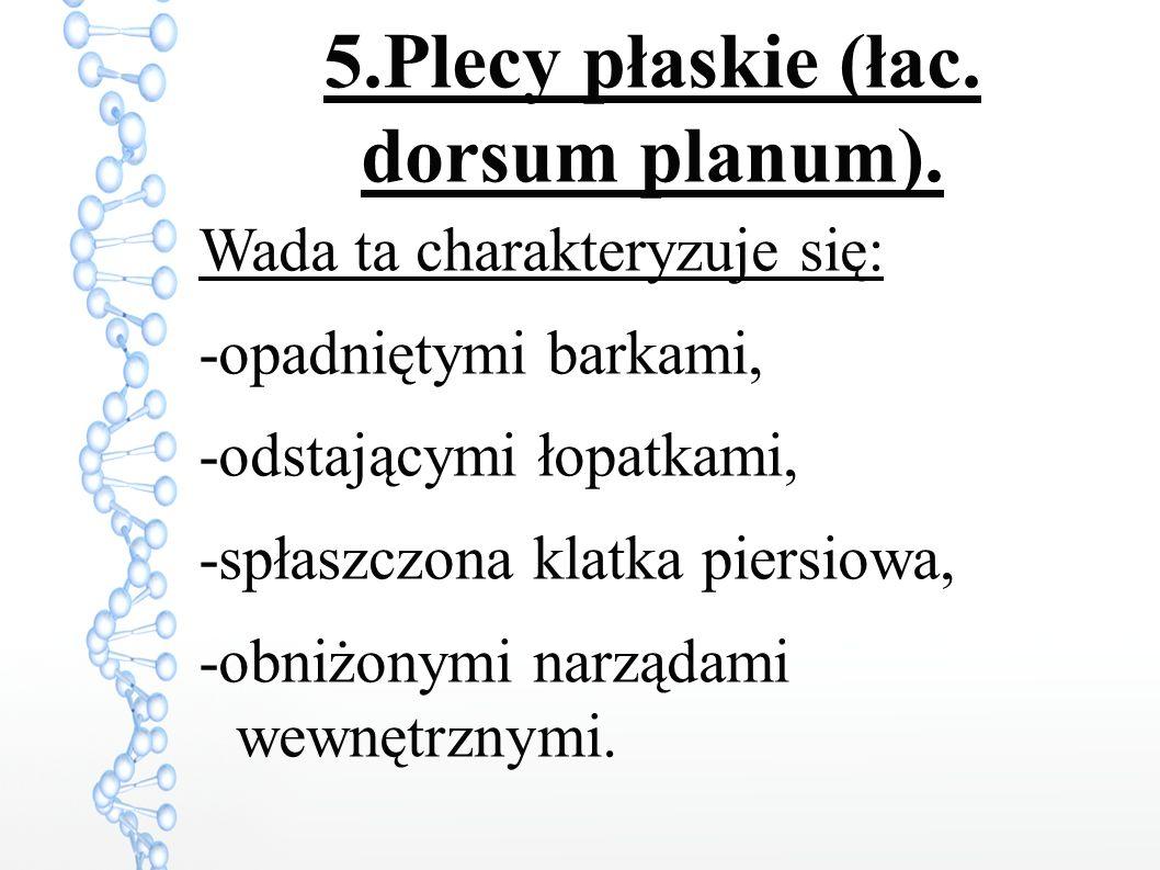 5.Plecy płaskie (łac.dorsum planum).