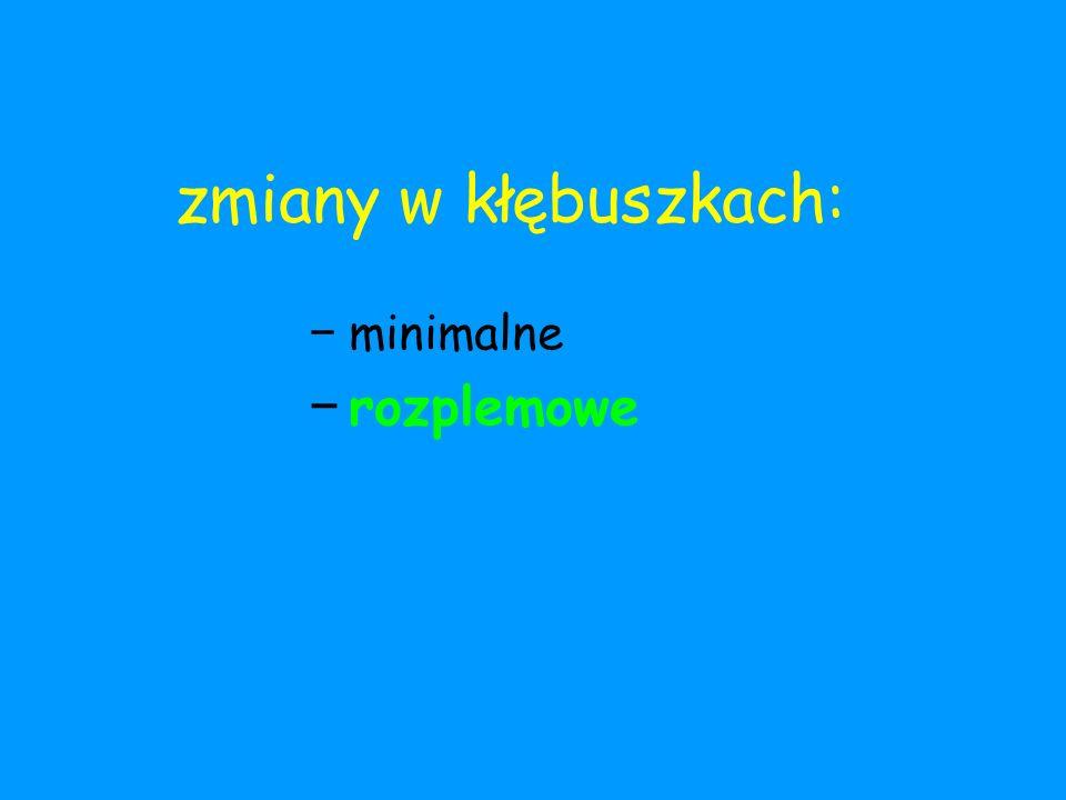 zmiany w kłębuszkach: − minimalne − rozplemowe