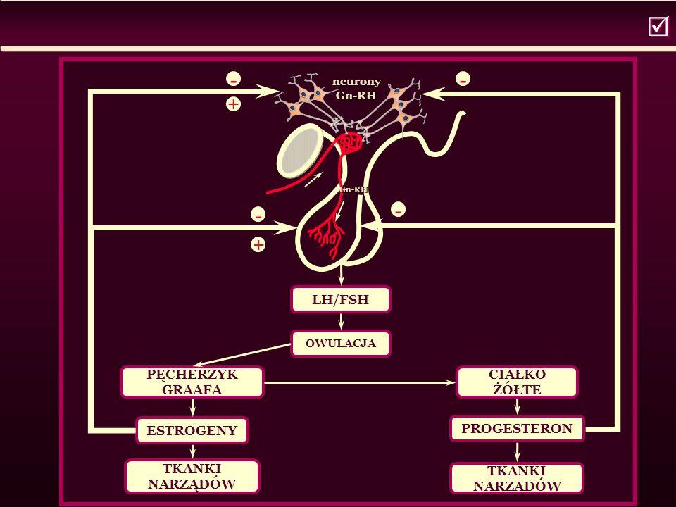   neurony Gn-RH Gn-RH Gn-RH LH/FSH OWULACJA PĘCHERZYK GRAAFA ESTROGENY TKANKI NARZĄDÓW CIAŁKO ŻÓŁTE PROGESTERON TKANKI NARZĄDÓW - + - - - +
