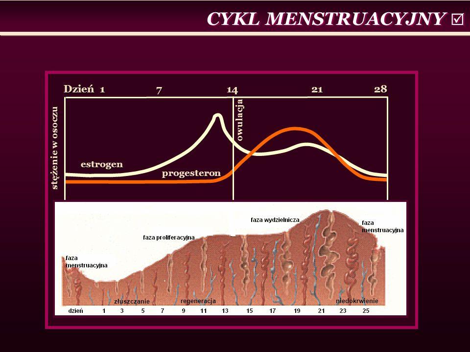 CYKL MENSTRUACYJNY  Dzień 1 7 14 21 28 estrogen progesteron stężenie w osoczu owulacja złuszczanie regeneracjaniedokrwienie