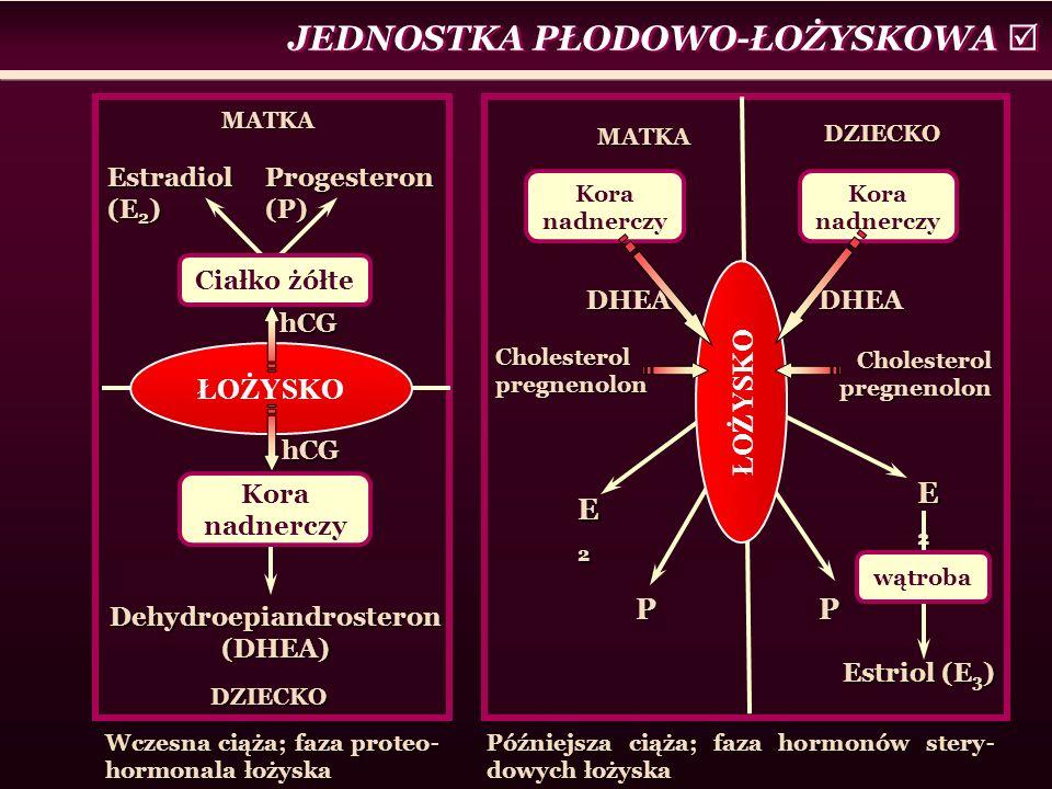 JEDNOSTKA PŁODOWO-ŁOŻYSKOWA  MATKA DZIECKO ŁOŻYSKO hCG hCG Ciałko żółte Estradiol (E 2 ) Progesteron (P) Kora nadnerczy Dehydroepiandrosteron (DHEA) MATKA DZIECKO DHEA E2E2E2E2 P Kora nadnerczy DHEA ŁOŻYSKO P E2E2E2E2 wątroba Estriol (E 3 ) Cholesterol pregnenolon Wczesna ciąża; faza proteo- hormonala łożyska Późniejsza ciąża; faza hormonów stery- dowych łożyska