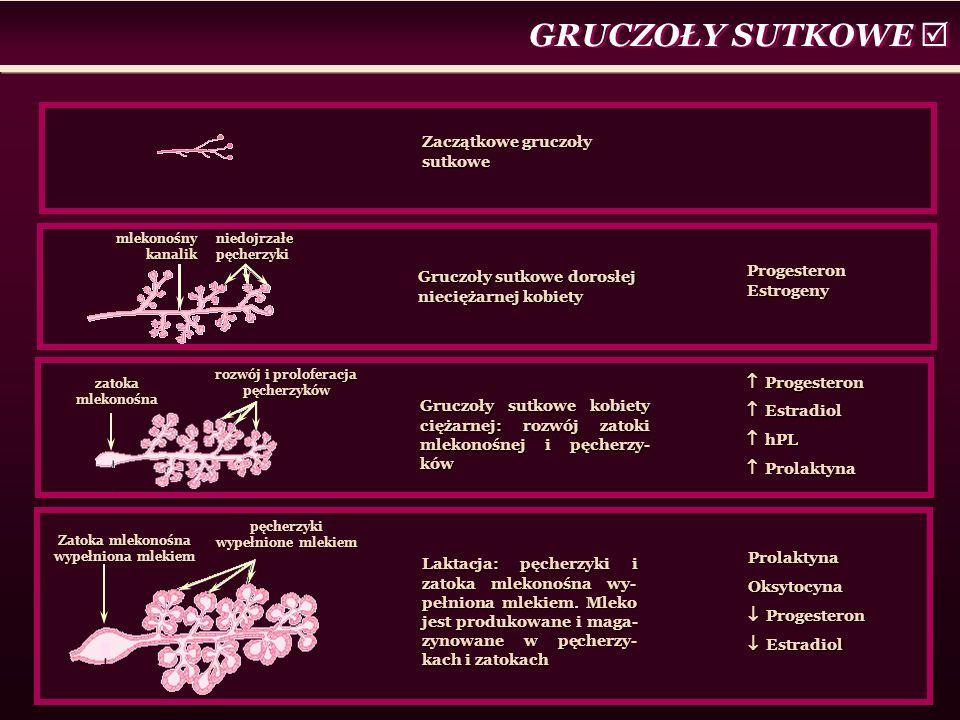 GRUCZOŁY SUTKOWE  niedojrzałe pęcherzyki mlekonośny kanalik zatoka mlekonośna rozwój i proloferacja pęcherzyków Zatoka mlekonośna wypełniona mlekiem pęcherzyki wypełnione mlekiem Zaczątkowe gruczoły sutkowe Gruczoły sutkowe dorosłej nieciężarnej kobiety Progesteron Estrogeny Gruczoły sutkowe kobiety ciężarnej: rozwój zatoki mlekonośnej i pęcherzy- ków  Progesteron  Estradiol  hPL  Prolaktyna Laktacja: pęcherzyki i zatoka mlekonośna wy- pełniona mlekiem.