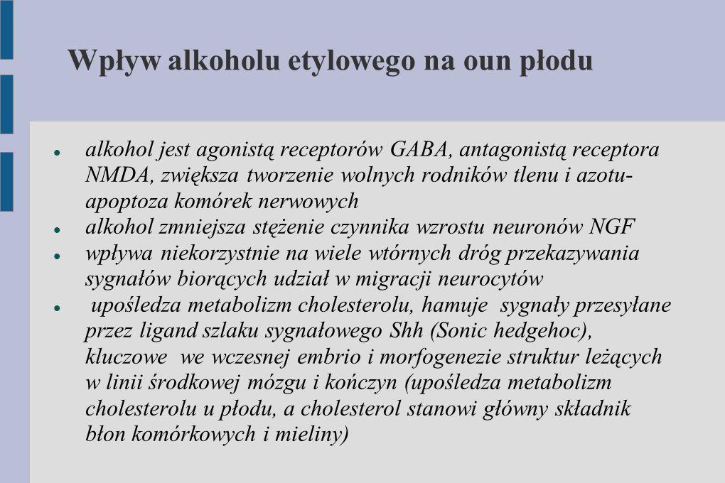 Wpływ alkoholu etylowego na oun płodu alkohol jest agonistą receptorów GABA, antagonistą receptora NMDA, zwiększa tworzenie wolnych rodników tlenu i a