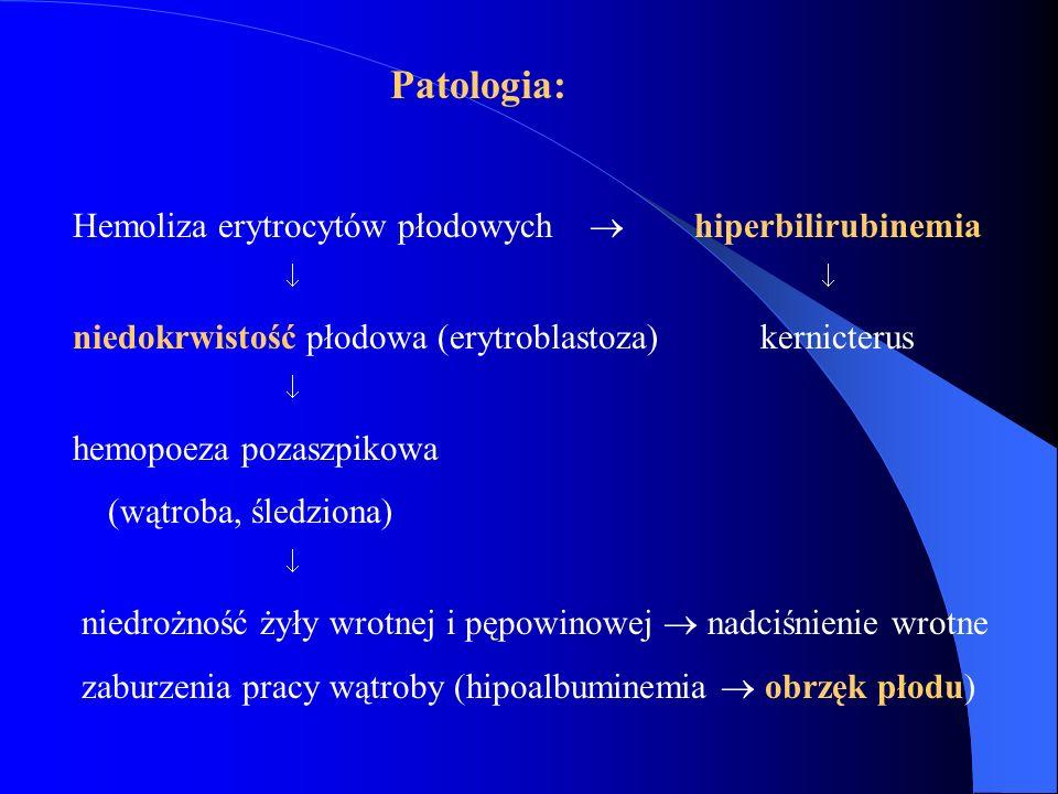 Patologia: Hemoliza erytrocytów płodowych  hiperbilirubinemia  niedokrwistość płodowa (erytroblastoza) kernicterus  hemopoeza pozaszpikowa (wątroba
