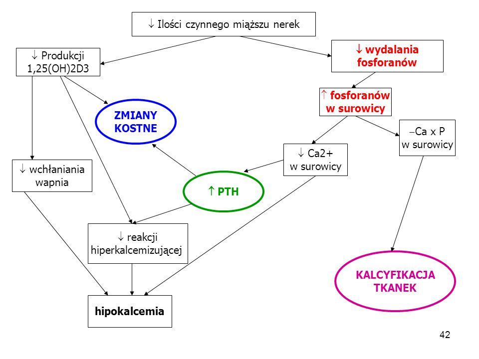 43  Pi  Ca  1,25(OH)2D3  Ca-R  VDR  p21, p27  TGF   EGF R  proliferacji PG oporność kości na działanie PTH hiperplazja poliklonalna przytarczyc Toksyny mocznicowe kwasica Hiperplazja monoklonalna przytarczyc oporna na leczenie