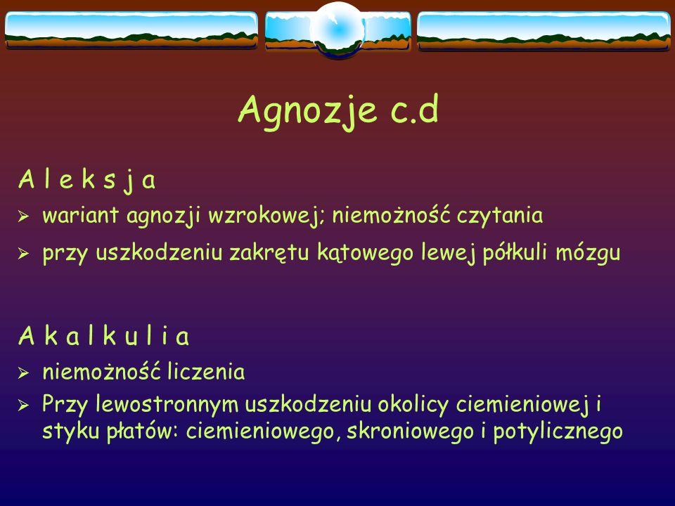 Agnozje c.d A l e k s j a  wariant agnozji wzrokowej; niemożność czytania  przy uszkodzeniu zakrętu kątowego lewej półkuli mózgu A k a l k u l i a 