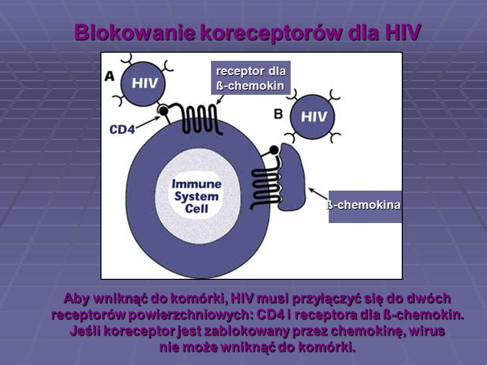Blokowanie koreceptorów dla HIV Aby wniknąć do komórki, HIV musi przyłączyć się do dwóch receptorów powierzchniowych: CD4 i receptora dla ß-chemokin.
