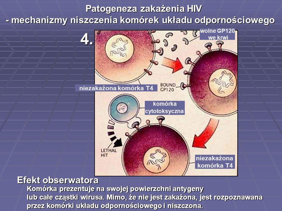 4. Komórka prezentuje na swojej powierzchni antygeny lub całe cząstki wirusa. Mimo, że nie jest zakażona, jest rozpoznawana przez komórki układu odpor